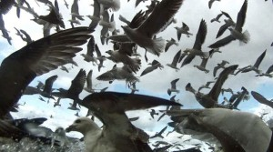 Leviathan- Seagulls